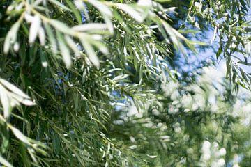 Sparkling tree van Johan Dingemanse