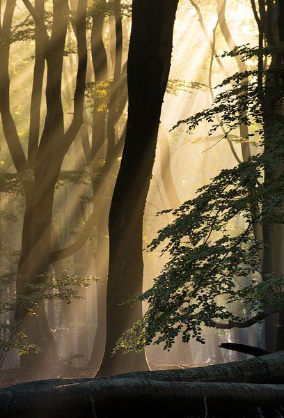 Baum im Nebel von Paul Begijn