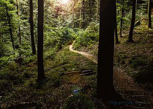 licht in het bos van peter desmet