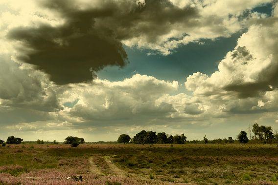 Heidelandschap op een zomerse dag