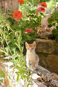 Junges Kätzchen von Erika Zollner