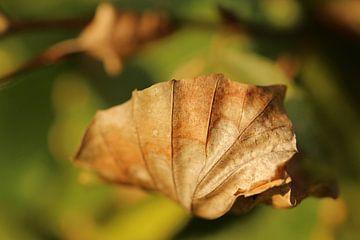 an autumn leaf von nele huyck