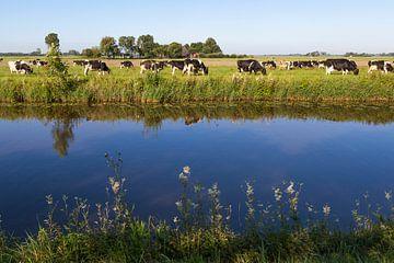 Les vaches dans le paysage néerlandais avec de l'eau sur Ger Beekes