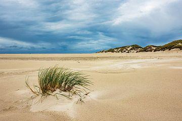 Dunes on the North Sea island Amrum, Germany van Rico Ködder