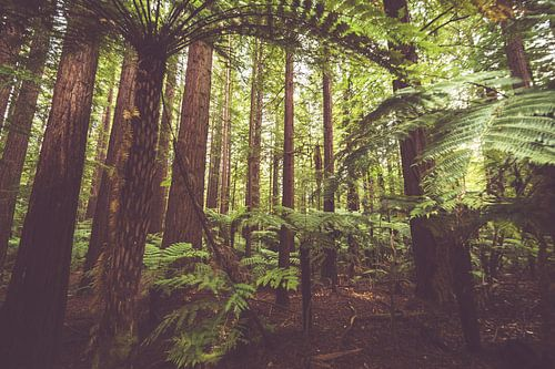 Mahonie Bos Nieuw Zeeland