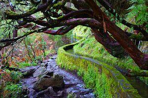 Levada met kromme bomen in Madeira