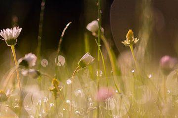 herbe d'été sur Tania Perneel