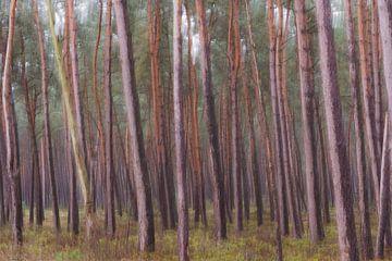 abstracte bomen part 1 van Tania Perneel
