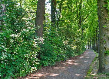 Wanderweg im Weerterpark im Stadtzentrum von J..M de Jong-Jansen