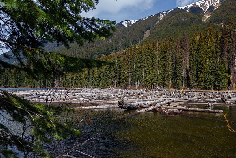 Drijfhout in een rivier in Canada van Menno Schaefer