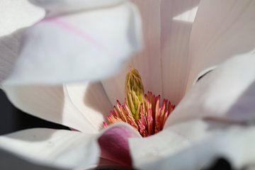 Magnolia van Marieke Funke