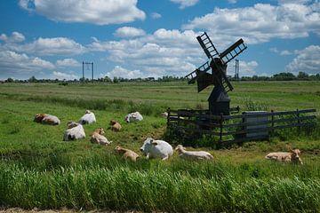 Paysage avec des vaches