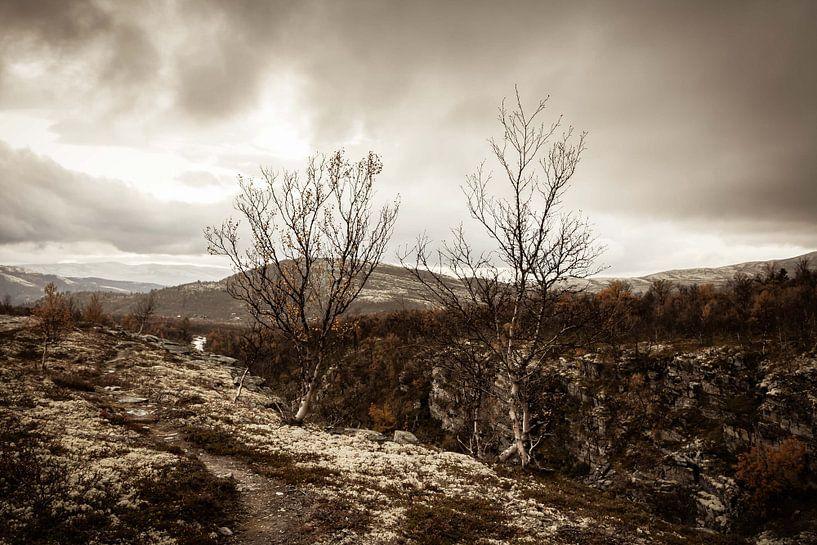 Autumn Rocks III van Frank Hoogeboom