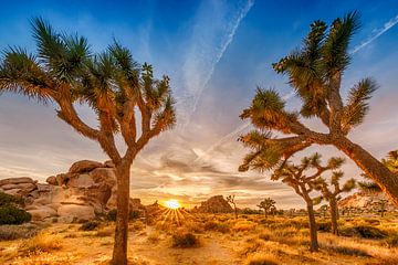 Prachtige zonsondergang in Joshua Tree National Park van