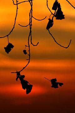 Trieste gezichten in zonsondergang van Wybrich Warns