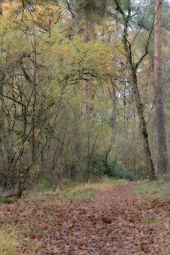 Herfst Softfocus van Roland Swennen