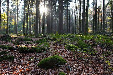 Waldidylle von Renate Knapp