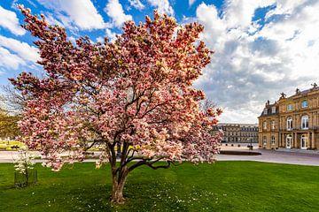 Magnolia's op de Schlossplatz in Stuttgart van Werner Dieterich