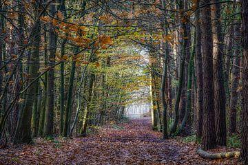 Wald von jacky weckx