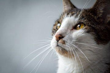Das Auge der Katze von Evelien
