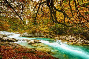Herfstbladeren aan de wilde rivier van Denis Feiner