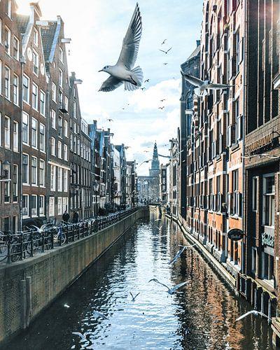Birds over Amsterdam