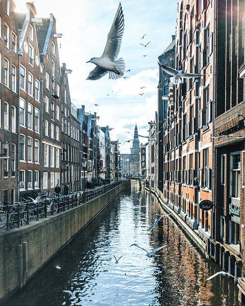 Birds over Amsterdam van Dennis H