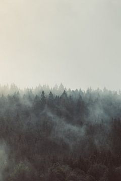 Nebel im Schwarzwald von Veri Gutte