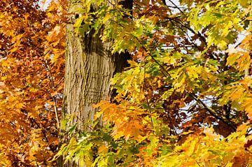 Gele en bruine herfstbladeren van Jessica Berendsen