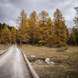 In den Wald von Thijs van den Broek