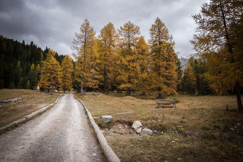 In het Bos - Dolomieten, Italië van Thijs van den Broek