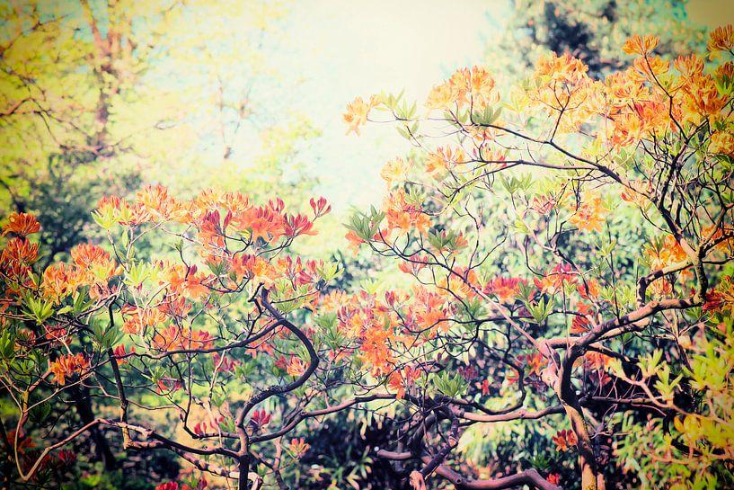 Flower Power! van Paula van den Akker