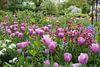 Tulpenpracht in de tuin van Monet van Aagje de Jong thumbnail