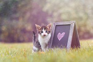 Love in the backyard