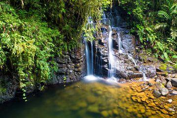 Wasserfall umgeben vom Dschungel (tropischer Regenwald) Guatemalas von Michiel Dros