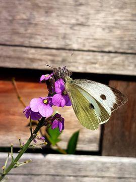 vlinder van Joelle van Buren