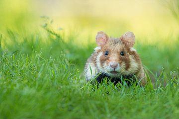Wilde hamster in het gras van Elles Rijsdijk
