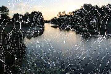 Nahaufnahme eines hauchdünnen Spinnennetzes von Rosalie Broerze