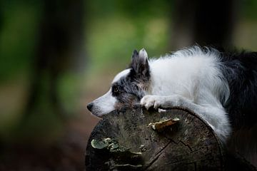 Hond in het bos van Carine Belzon