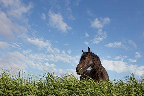 Paard in gras
