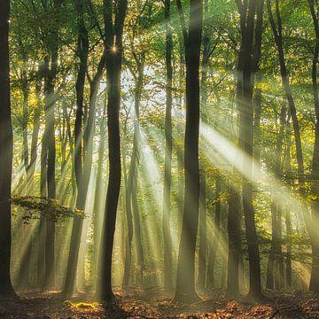 Sunny Start in den Tag ........, Piet Haaksma von 1x