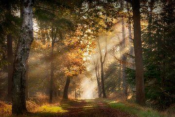 Zonneharpen in een magisch bos
