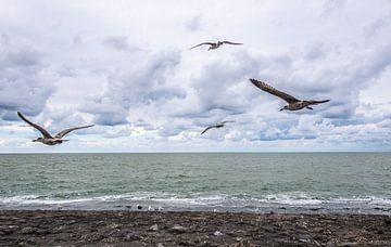 Möwen über dem Nordseestrand. von Brian Morgan