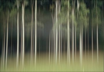 Umzug, träumerischen Reihe von Bäumen im Wald von Marcel van Balken