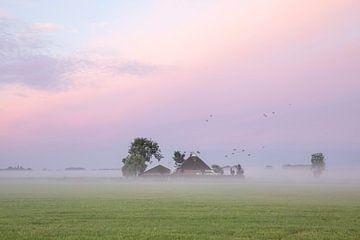Vögel fliegen im Morgengrauen über den Bauernhof von Olha Rohulya