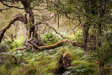 In einem Wald in Schottland von Fred Louwen