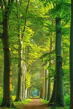 Ents im Wald in Heiloo von Lars van de Goor