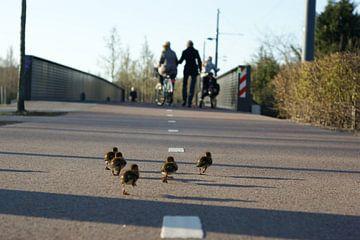 Running ducks van Elise Croese