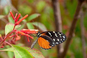 Vlinder van Thomas Poots