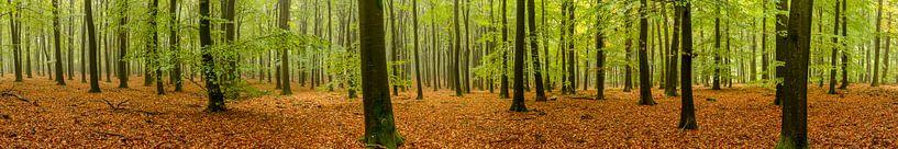 Bos panorama van Sjoerd van der Wal